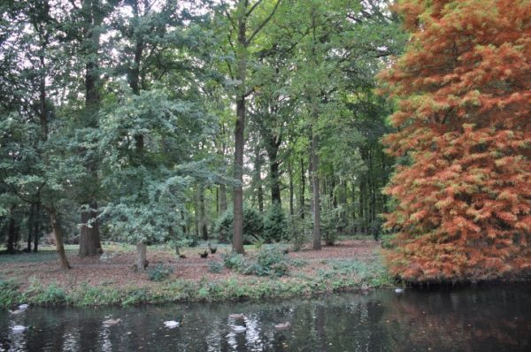 Het bos rondom kasteel Oud Poelgeest