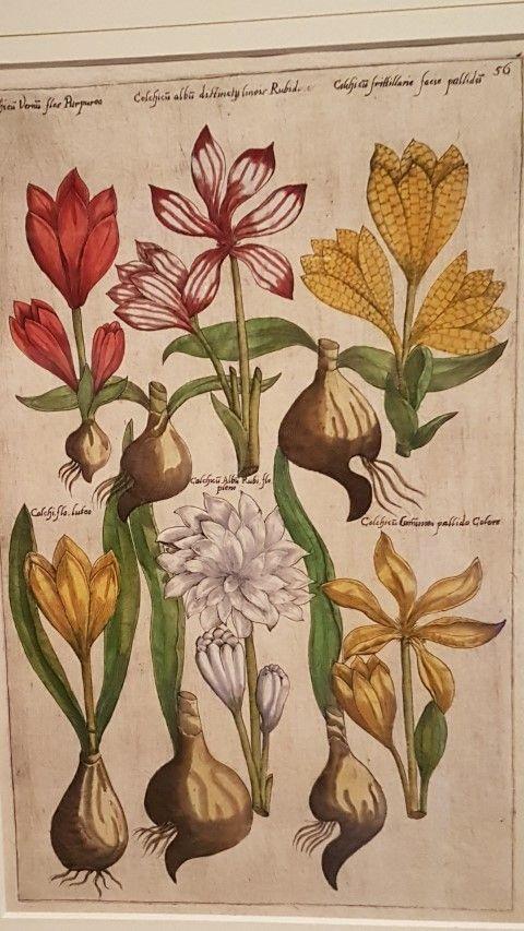 Bollenstreek, Museum de Zwarte Tulp, Lisse, catalogus van Sweerts uit 1612