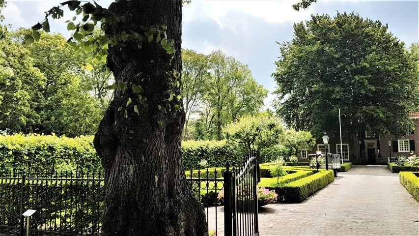 Geboortehuis Herman Boerhaave n Voorhout, met rechts een tulpenboom van een stek uit de boom van Oud Poelgeest te Oegstgeest